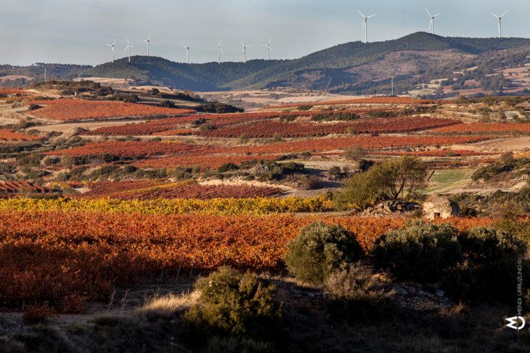 paisaje olivos hojas rojizas con montañas