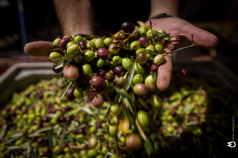 olivas en la mano