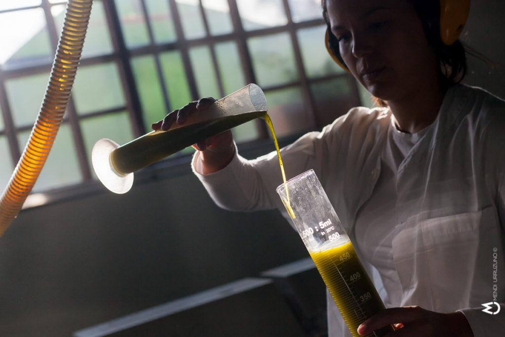 elaboracion tecnologica y tradicional aceite